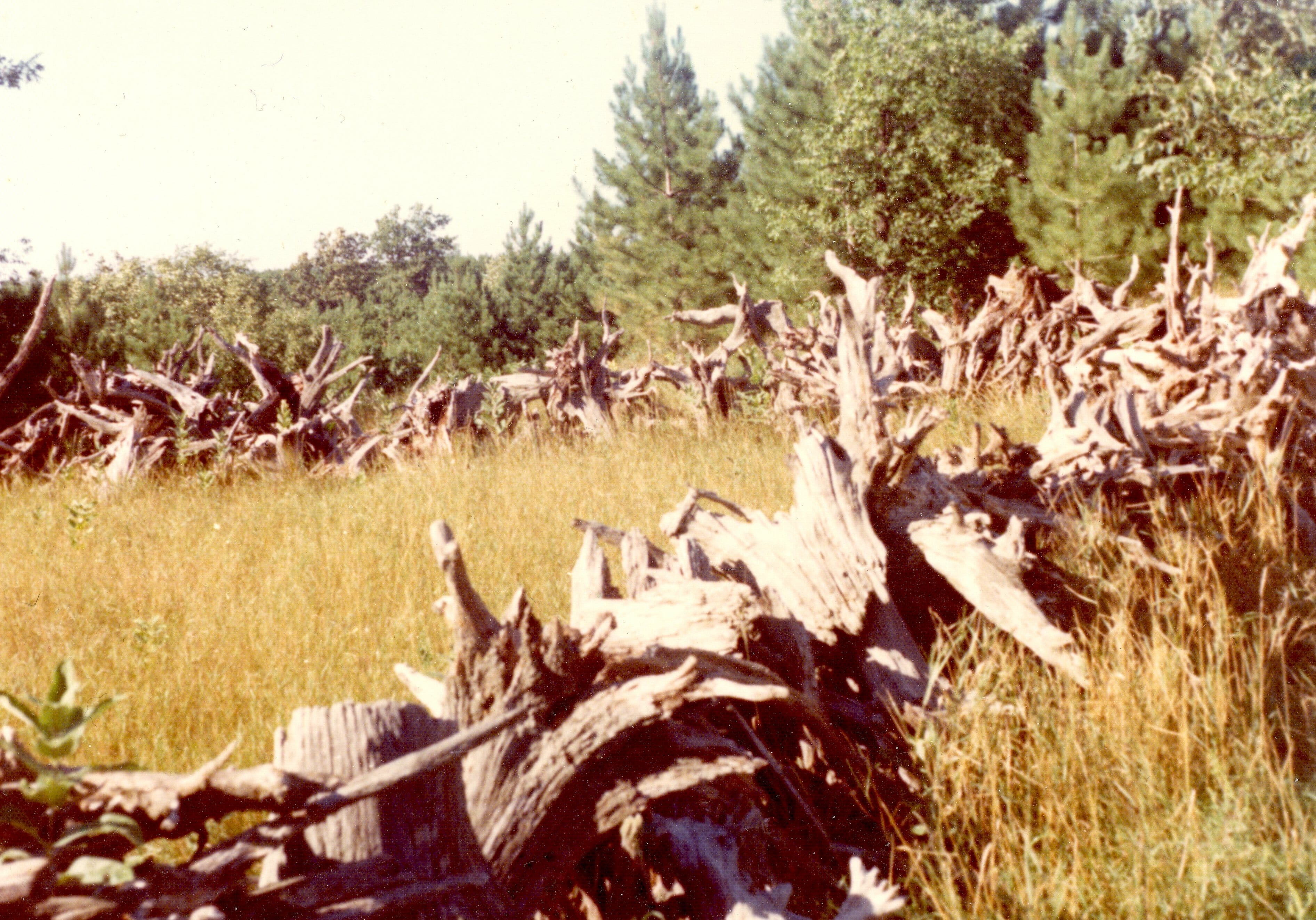 Fence of stumps - Herbster